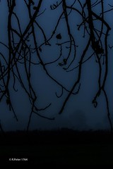 dark and soft (R-Pe) Tags: show camera coffee cake canon dessert photo essen nikon foto fotografie photographie tea sony picture kaffee pic exhibition peter eat gift bild tee geschenk bilder ausstellung backen gebck 1764 rbi 1764org www1764org