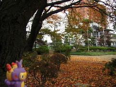 Ambipom in Kasukabe, Saitama 3 (Kasadera) Tags: toys figure pokemon pokmon  kasukabe   pokemonkids  ambipom     ambidiffel capidextre