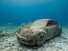 Think Blue (altsaint) Tags: 714mm beetle gf1 islamujeres jasondecairestaylor musa mexico panasonic vw underwater