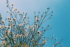 You'll always find your way back home. (DannyGuardia) Tags: flowers freedom beautiful trees life garden camera photography nature indie vintage amazing 55mm sky clouds blue art paradise