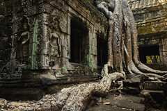 Ta Prohm Angkor (Derek Robison) Tags: cambodia tree temple angkor decay nature stone