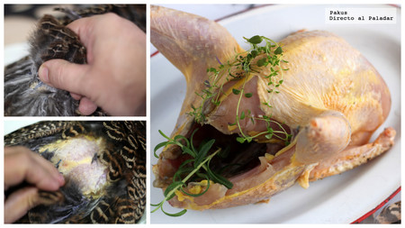How to pluck a pheasant, a Partridge or any bird hunting?