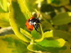 Ladybird (Peanut1371) Tags: ladybird insect bug spotted red black nationalgeographicwildlife