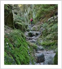 through deep woods (Norbert Kaiser) Tags: sächsischeschweiz elbsandsteingebirge wanderweg pfad griesgrund bergpfad tal schlucht sandstein sandstone