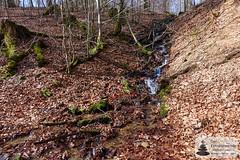 Quellbach am Trauntal-Höhenweg