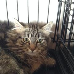 Matilda - 6 month spayed female