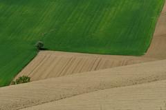 Geometrie primaverili marchigiane (luporosso) Tags: natura nature naturaleza naturalmente nikon nikond500 nikonclubit nikonitalia imdifferent marche civitanovamarche italia italianfood campagna campi country countryside verde green abigfave