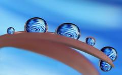 waterworld (Lorraine1234) Tags: waterdrops macro focusstacking