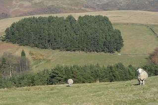The Foothills of Kinder, Peak District National Park.