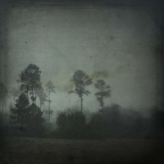 ghosts in the darkness (jssteak) Tags: canon t1i fog morning texas winter pine trees aged vintage square