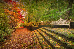 I Could Sit Here All Day || BREENHOLD GARDENS || MT WILSON (rhyspope) Tags: australia aussie nsw new south wales canon 5d mkii blue mountains mount mt wilson autumn fall foliage steps stairs bench chair garden trees forest woods breenhold rhys pope rhyspope