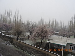 DSCN2305[1] (drmohammad_ibrahim200760) Tags: heavy snow fall skardu april