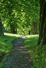 Der Pfad / The Path (UlvargHS) Tags: pfad weg bäume steinig grün alt hainichen sachsen friedhof ulvarg sony
