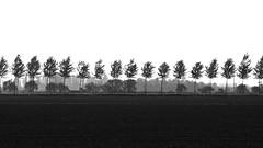 Black Trees (Stefano Montagner - The life around me) Tags: agriculture backgrounds blue farm field growth land landscape meadow nature nonurbanscene outdoors ruralscene scenics season sky springtime tree yellow colza paesaggio