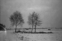 THE BIRCHES (haj.pawel) Tags: niepokoj drzewo widok snieg agfasensorflash fotopanhl analog expired fear winter film old