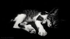 Deep sleep... (PY6RDM) Tags: gato cat bw blackwhite black white motog4plus moto lenovo motorola pretoebranco preto branco