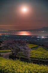 Moonshine (Tomohiro Urakawa) Tags: moonshine moon night moonlight nagasaki 長崎 白木峰高原 桜 菜の花