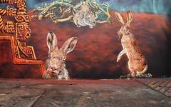 Adey (HBA_JIJO) Tags: streetart urban graffiti stencil paris animal art france artist hbajijo wall mur painting spray pochoiriste urbain adey lapin rabbit peintue