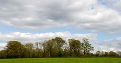 Trees near Horsted Keynes (pondhopper1) Tags: tress crowsnests horstedkeynes sussex westsussex