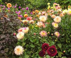 (twinkle_moon_bunny) Tags: flowers flower project eden