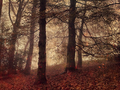 Into the Woods (Sarah Jarrett) Tags: autumn trees winter wild beauty landscape woods norfolk textured memoriesbook