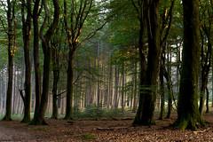 IMG_0966 (judithvanagthoven) Tags: trees canon bomen forrest herfst nederland natuur bos zon ochtend speulderbos zonnenstralen