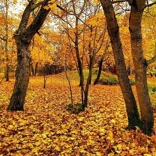 #autumn #fall #Kouvola