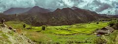 Sapa mountains (suazo3d) Tags: panorama mountains rice valle panoramic vietnam valley panoramica fields campos sapa arroz montañas suazo suazo3d