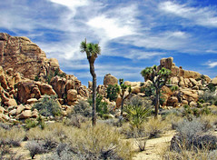 Trail to Hidden Valley, Joshua Tree NP 4-13 (inkknife_2000 (7 million views +)) Tags: usa landscape desert joshuatree skyandclouds vaportrail joshuatreenationalpark yuccaplant rockpiles dgrahamphoto