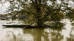 Day after, danger is still hire (malioli) Tags: canon river europe flood croatia floods flooded hrvatska watre turanj karlovac korana mrenica overflood logorite mekuje mostanje