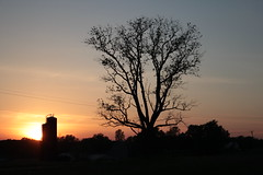 Spring Sunset, May 2014 (marylea) Tags: sunset silhouette evening spring silo silos 2014 blackwalnuttree may25