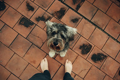 En patas (Julieta Pagano) Tags: red dog pet feet terrace schnauzer perro pies