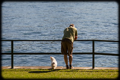 At Kurraba Point Reserve with Diesel (Craig Jewell Photography) Tags: park grass cat canon iso200 diesel bokeh sydney australia craig f28 ragdoll 135mm flamepoint 0ev ef135mmf2lusm craigjewell ¹⁄₅₀₀₀sec canoneos1dmarkiv ©2014craigjewell kueeabapointreserve 33°5043s151°1323e 3042x4563