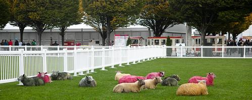 COLOURED SHEEP AT THE WEB SUMMIT DUBLIN  2014 Ref-1155