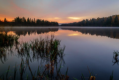 Morning Calm (charley496) Tags: trees lake water grass forest sunrise reflections river reeds dawn weeds nikon nikkor daybreak d5200