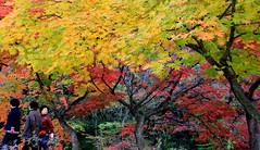 Autumn in Korea - On Explore 11 Nov 2014 (kyuen13) Tags: