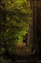 Mystery lane (Mluzynn) Tags: autumn trees fall forest automne nikon automn arbres lane chemin fort d90