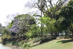 Um pouco do Parque do Ibirapuera (quanaval_sp) Tags: parque brazil brasil landscape lago sopaulo paisagem sp ibirapuera