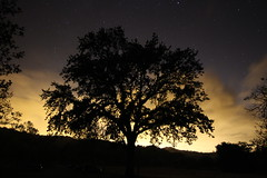 Spooky Tree (curebfd) Tags: park light sky tree night canon stars glow angle wide wideangle spooky astrophotography pollution 1018 sl1 nightphotohraphy canonsl1