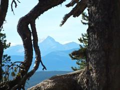 Ranger Summit Hike - Mt Glasgow between the branches (benlarhome) Tags: canada trekking trek kananaskis hiking path hike trail alberta fullertonloop braggcreek gnneniyisithebestofday rangersummit