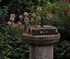 By the Sundial in the Blooming darkness (Dazzygidds) Tags: texture sundial lichen blooms nationaltrust warwickshire coughtoncourt