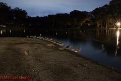 IMG_9155.jpg (Dj Entreat) Tags: goldengatepark longexposure nightphotography canon ducks bayarea nightscene sanfranciscocalifornia redring canonlens canon6d 1635ii