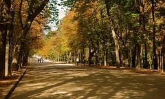 Parque del Retiro finales de Octubre. (M Roa) Tags: platinumpeaceaward