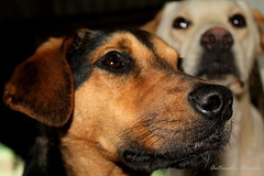 Naricitas / Noses (T o r n a s o l a r ) Tags: chile dogs ces perros hunde chiens  cani hundar quilpue mejoramigo naricitas