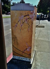 Plum Blossoms (ArtFan70) Tags: california ca flowers usa flower art america berkeley downtown unitedstates blossom box blossoms henderson plumblossoms downtownberkeley utilitybox paintedutilitybox robbinlgrehenderson robbinhenderson robbinlegerehenderson