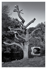 Truncated (Nandhor) Tags: park trees blackandwhite bw tree bird water birds river canal branches twisted regentspark