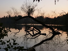 Sonnenuntergang-sunset (Anke knipst) Tags: sunset lake reflection tree see sonnenuntergang spiegelung baum