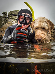 February Half Term...what to do (davidmcbridephotography) Tags: labradoodle dog snorkeller swimmer camel spilt shot sea united kingdom cornwal isles scilly scillies boy wetsuit seaweed exhilerating cold freezing loade porthellick beach adventure granite awesome fun moment son pooch clear sharp nikon nauticam zen holiday destination travel pet digital sol march depthoffield sunlight exposure portrait covert iconic mcbride news media outdoor