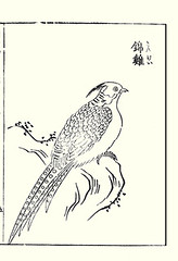 Golden pheasant (Japanese Flower and Bird Art) Tags: bird golden pheasant chrysolophus pictus phasianidae shotaro asami nihonga woodblock picture book japan japanese art readercollection