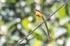 J_Nirula-7251170312Valparai (Touching Senses) Tags: chestnutheadedbeeeater valparai2017